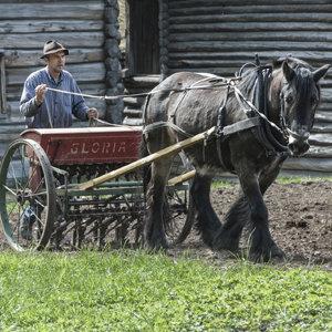 Bonden styrer hesten under gårdsarbeid på Maihaugen på Lillehammer.