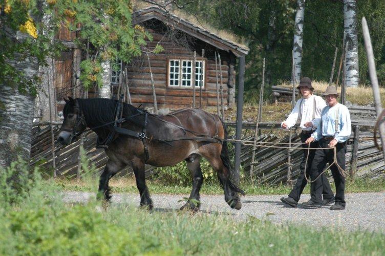 Hesten Bron i arbeid på Maihaugen, Lillehammer. Foto: Maihaugen.