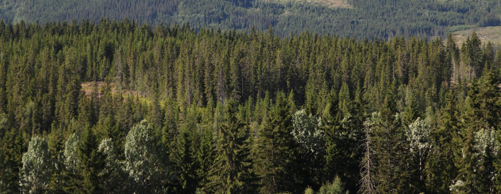 Skoglandskap fra Saksumdal