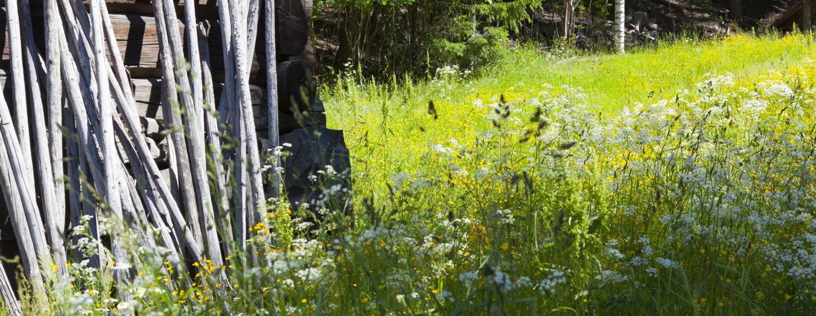 Landskapsbilde fra Maihaugen, Lillehammer.
