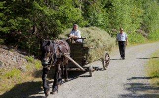 Maihaugen, Lillehammer: høykjøring med hest og kjerre.