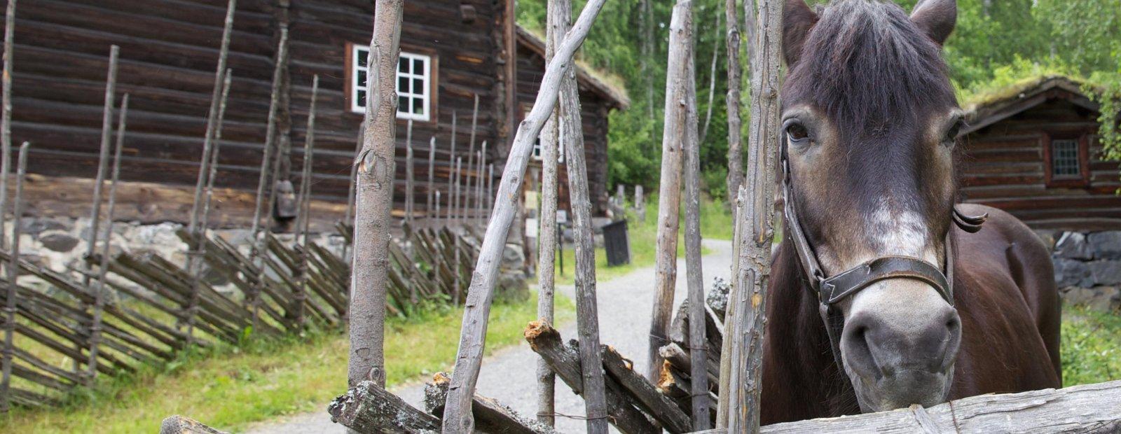 Hest titter over skigarden i Bygda på Maihaugen, Lillehammer
