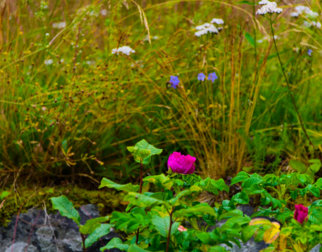 Blomster på Maihaugen, Lillehammer.